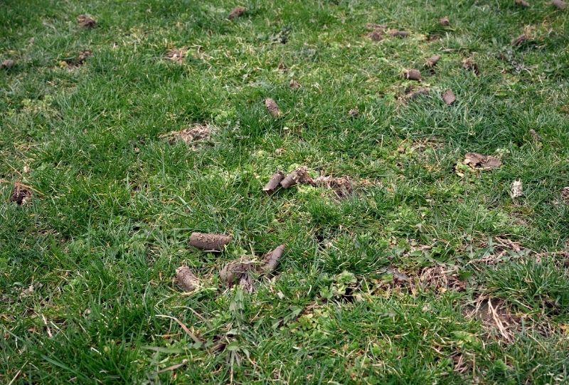 Aerating Lawns North Carolina