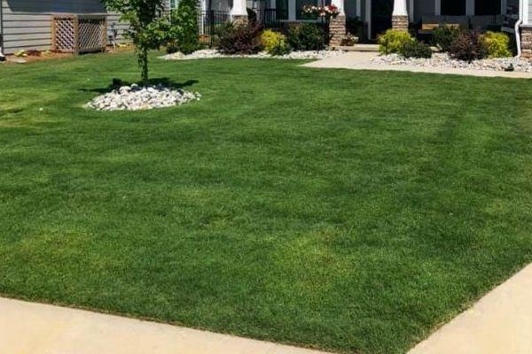 spring lawn service